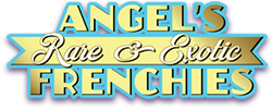 Angels Exotic Logo